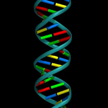 DNA - Blueprint of Life